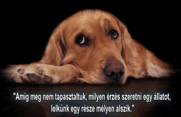 kutyáról idézetek Kutyás idézetek